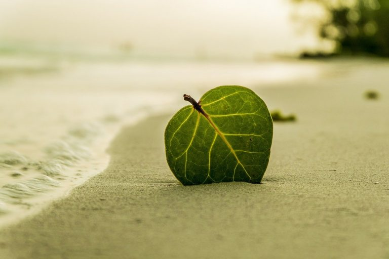 beach, leaf, green